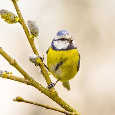 Fågelskådning i Halmstad