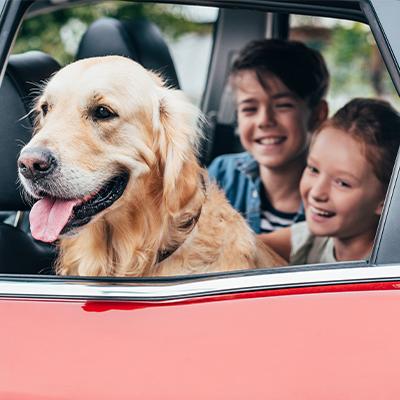 Ta med hunden och familjen på semester!